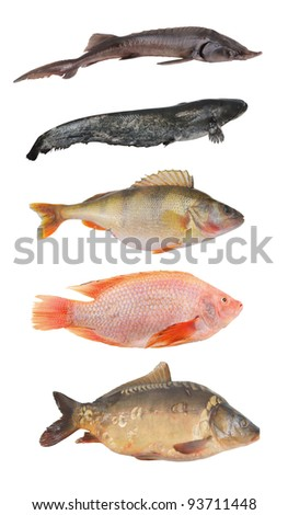 Fish collection isolated on white background
