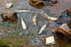 fish die due to water pollution / waste water