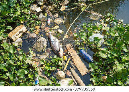 fish die due to water pollution / waste water / water pollution