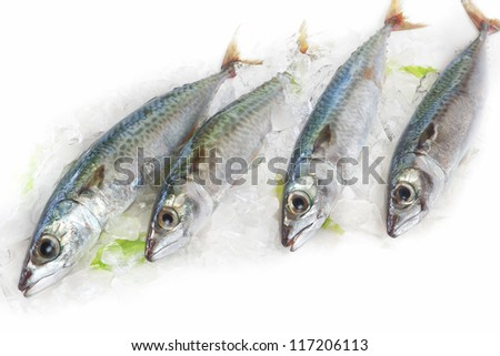 Fish dish of mackerel in a bowl of ice.
