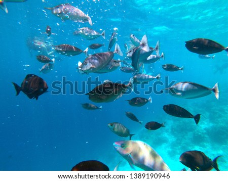 Fish diversity in a tropical coral reef in Maldive. Blue ocean background #1389190946