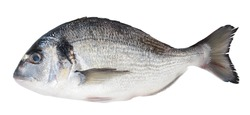 Fish dorado isolated on white background with clipping path and full depth of field. Top view. Flat lay