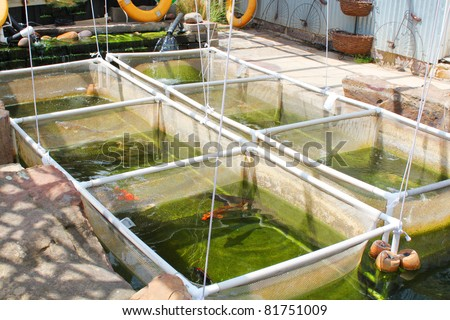 Fish farm nursery