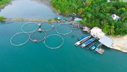 Fish farm with cages for fish and shrimp, top view. Fish cage for tilapia, milkfish farming aquaculture and pisciculture practices. Philippines, Luzon. Aerial view of fish ponds for bangus, milkfish.