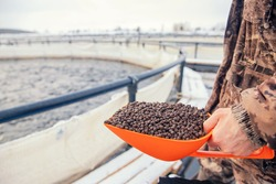 Fish farm worker holds scoop of pelleted feed for feeding rainbow trout and salmon.