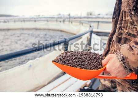 Fish farm worker holds scoop of pelleted feed for feeding rainbow trout and salmon. Foto d'archivio ©