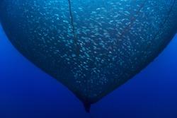 Fish farming,aquaculture nets.