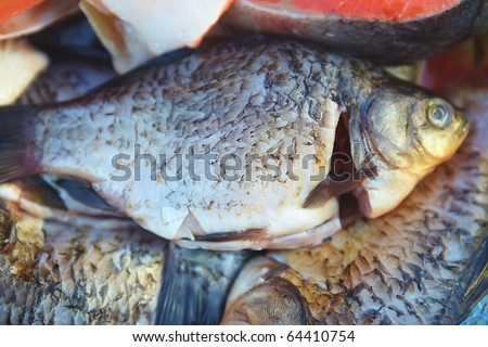 fish food european carp for meal but nature