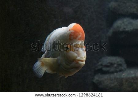 Fish from the Chicago aquarium  #1298624161