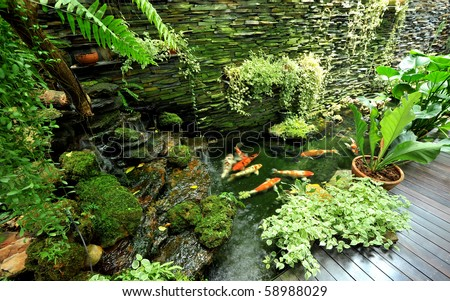 Fish Garden Stock Photo 58988029 Shutterstock