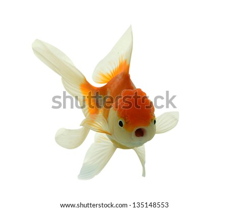 Fish, Goldfish, Gold, Pet, White, Bowl, Aquarium, Motion ...