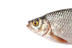 Fish head close-up