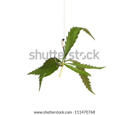 Fish hook with leaf of marijuana isolated on white background