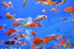 fish in an aquarium, fish in an aquarium on a blue background