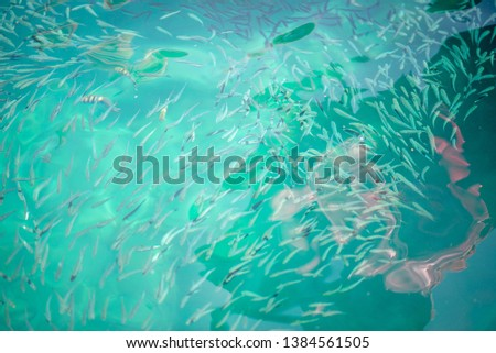 Fish in clear water, clear water in Koh Nang Yuan
