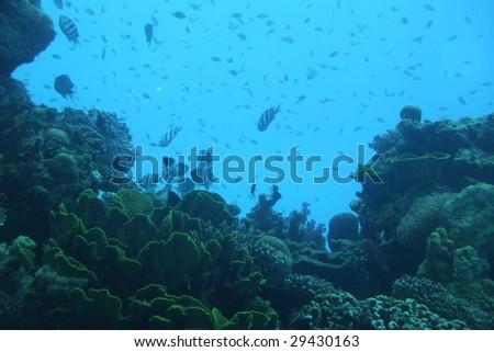 fish in eilat