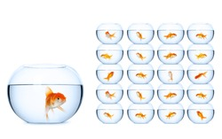 Fish in fishbowls, isolated on white background. Concept of self-management business