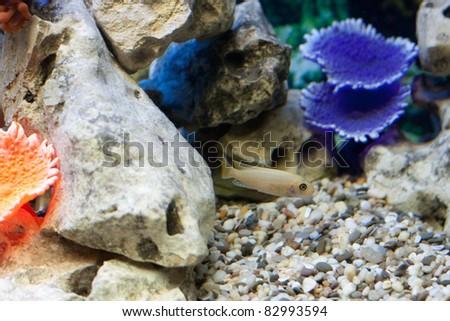 Fish in fishtank