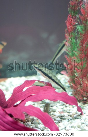Fish in fishtank. Underwater