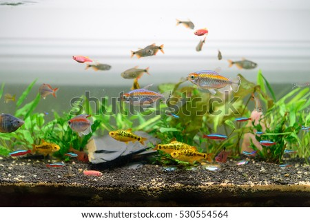 Fish  in my aquariums.