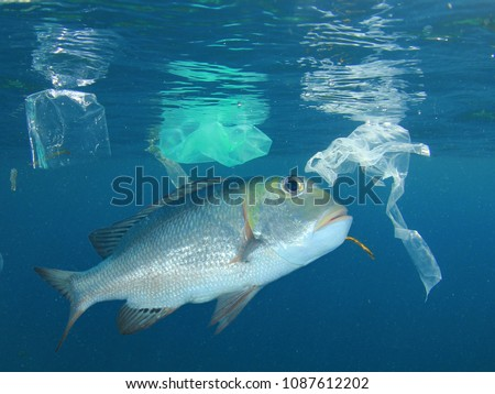 Fish in polluted sea. Seafood is now contaminated with plastic pollution