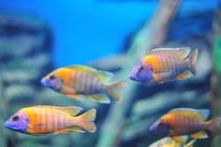 Fish in the aquarium.
