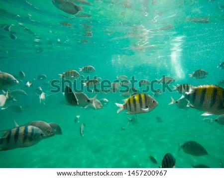 Fish in the Bay of Angra, Lagoa Azul Ilha Grande (Big Island)- Angra dos Reis - Rio de Janeiro - Brazil Foto stock ©