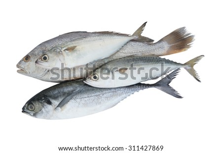 stock-photo-fish-isolated-on-the-white-b