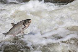 fish jump fresh water background