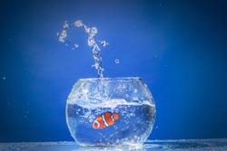 Fish jumping, aquarium, spalsh