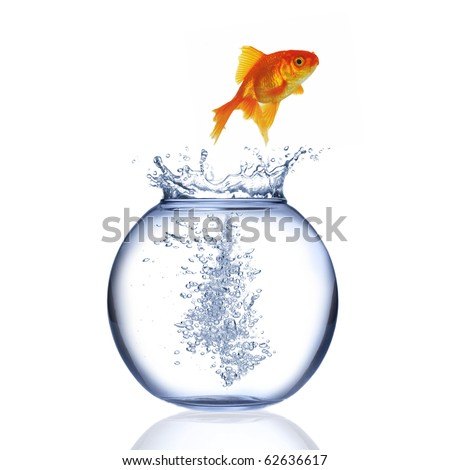 Fish jumping out of aquarium isolated on a white background