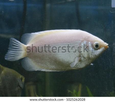 Shutterstock Fish kisser in the aquarium