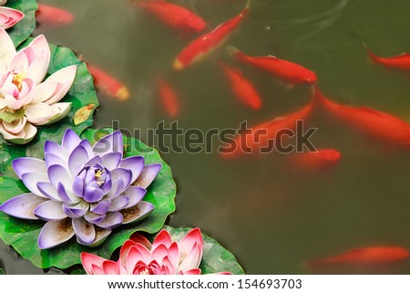 Fish koi in pond and lotus flower
