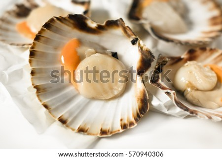 Fish market. Delicacies. Fresh scallops on a white background