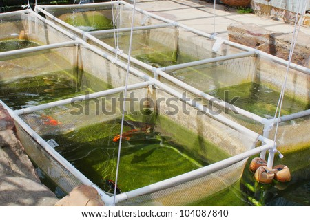 Fish nursery for koi