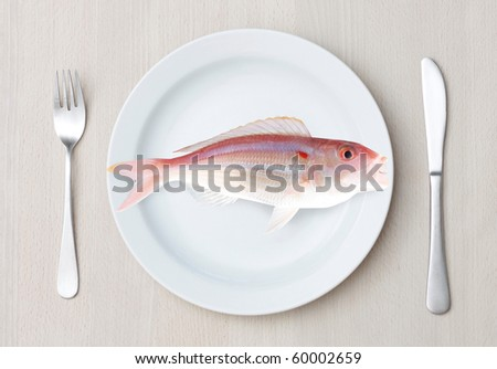Fish on a plate - stock photo