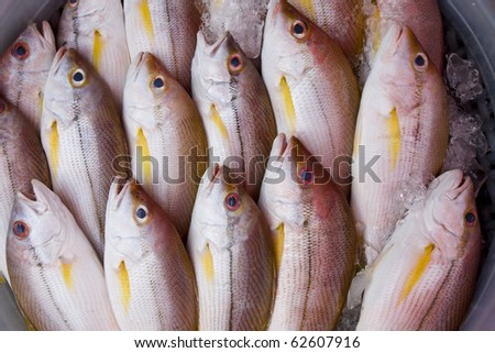 Fish on the market in Thailand