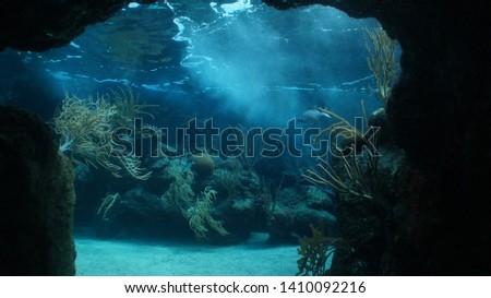 fish on the reef, coral reef, blue reef, fish underwater #1410092216