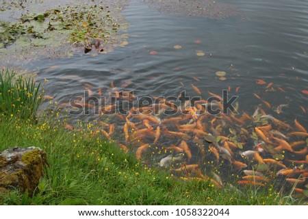 FISH POND BACKGROUND #1058322044