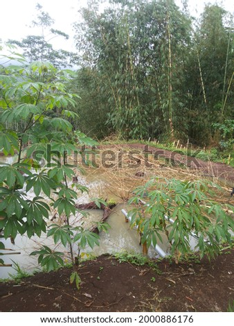 Fish pond covered by bamboo sticks