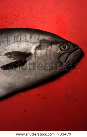 fish red background Foto stock ©