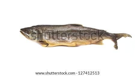 fish salmon on white background