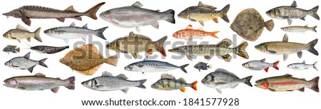 Fish set isolated. Collection fresh raw fish. Sea and freshwater fish Foto stock ©