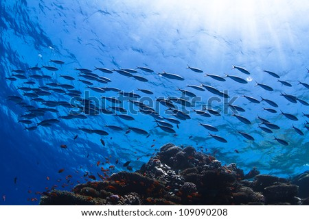 fish shoal swimming over beautiful coral reef under reflecting water surface with sunrays in corner