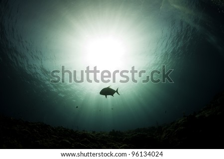fish silhouetted against a sun burst underwater