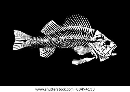 Fish skeleton isolated