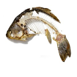Fish skeleton that was eaten, leftovers of food. Bones crucian carp cut out on white background.