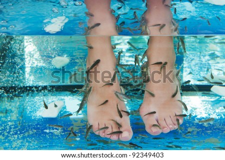 Fish spa in a beautiful blue water
