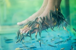 Fish spa pedicure massage treatment.
