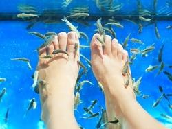Fish spa pedicure. Rufa Garra fish spa pedicure massage treatment. Closeup of feet and fish in blue water. Female feet.